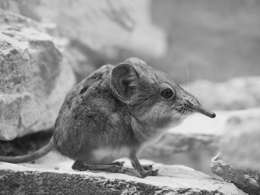 ハネジネズミに学ぶポジショニング 戦略【市場開拓の例】